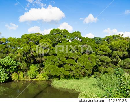 美麗的池塘 35226128