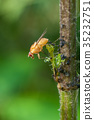 Yellow dung fly on a branch in the forest 35232751