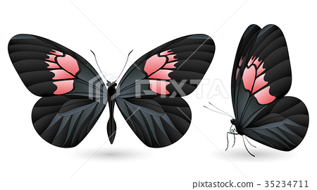 Set of colorful butterflies. Front and side view 35234711