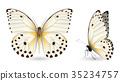 蝴蝶 一組 立體 35234757