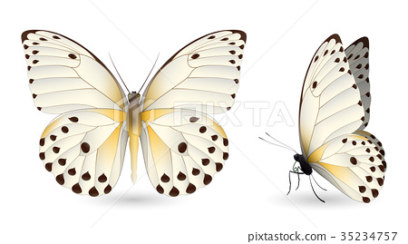 Set of colorful butterflies. Front and side view 35234757