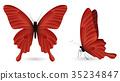 蝴蝶 一組 立體 35234847