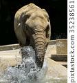 african, elephant, elephants 35238561