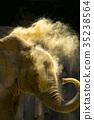 african, elephant, elephants 35238564