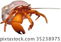 Red Hermit Crab 35238975