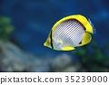 물고기, 생선, 수영 35239000