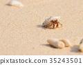 陆寄居蟹 寄生蟹 寄居蟹 35243501