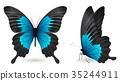 蝴蝶 蟲子 昆蟲 35244911