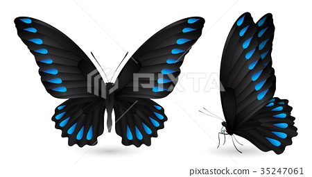 Set of colorful butterflies. Front and side view 35247061