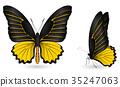 蝴蝶 蟲子 昆蟲 35247063