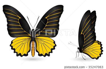 Set of colorful butterflies. Front and side view 35247063