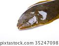 掙扎 魚 生魚片 35247098