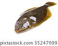 掙扎 魚 生魚片 35247099