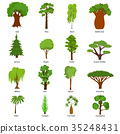 Different Green Tree Types Icons Set. Vector 35248431