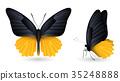 蝴蝶 蟲子 昆蟲 35248888