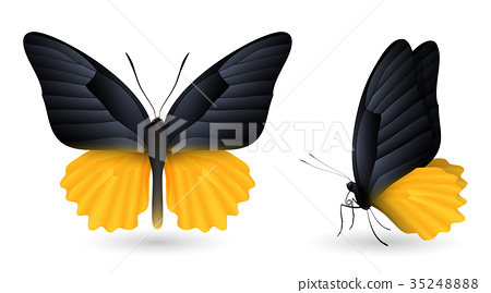 Set of colorful butterflies. Front and side view 35248888