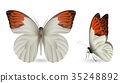蝴蝶 蟲子 昆蟲 35248892