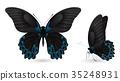蝴蝶 蟲子 昆蟲 35248931