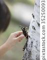 곤충, 곤충채집, 손 35250093