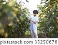 作物 男孩 孩子 35250676
