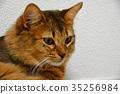 猫抓东西 35256984