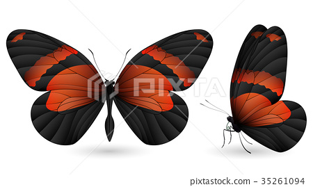 Set of colorful butterflies. Front and side view 35261094