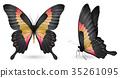 蝴蝶 蟲子 昆蟲 35261095