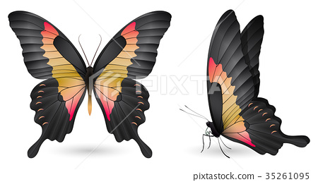 Set of colorful butterflies. Front and side view 35261095