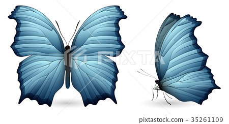 Set of colorful butterflies. Front and side view 35261109