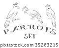 Parrots Contours 35263215