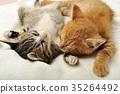 一只小猫 35264492