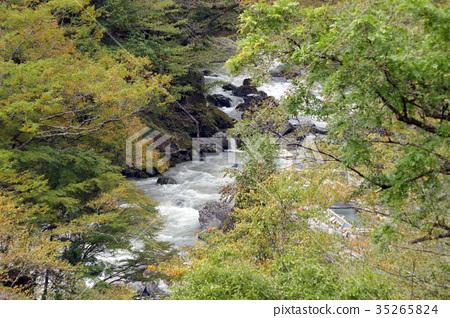 奧多摩/平原河 35265824