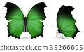 蝴蝶 蟲子 昆蟲 35266695