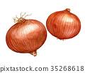 水彩 水彩画 蔬菜 35268618