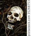 human skull buried in the soil with the roots 35268753