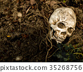 human skull buried in the soil with the roots 35268756