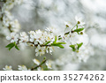 flower, blossom, branch 35274262