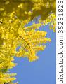 은행 나무 (빈 백) 35281828