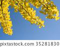 은행 나무 (빈 백) 35281830