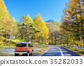 autumn, autumnal, maple 35282033