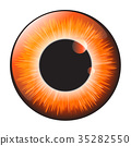 Orange, hazel, iris 35282550