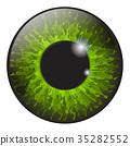 green, iris, eye 35282552