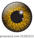 Orange, hazel  iris eye realistic  vector  35282553
