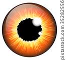 Orange, hazel, iris 35282556