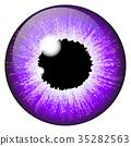 Purple, iris, eye 35282563