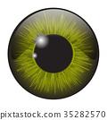 green, iris, eye 35282570
