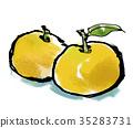 檸檬 日本柚子 柚子(小柑橘類水果) 35283731