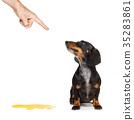 狗 狗狗 学习 35283861