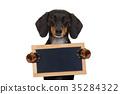 animal, background, banner 35284322