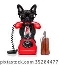 animal, call, dog 35284477